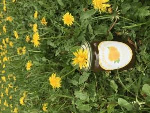 Gelée de fleurs de pissenlits